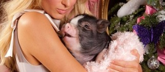 paris-hilton-and-her-pig-8877-1262485360-13.jpg