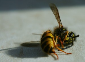 dead-bee-300×220