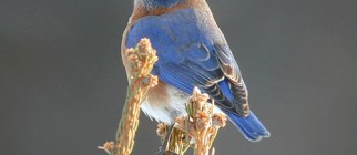 BlueBird_windham_hunter_catskill_bed_and_breakfast_b&b