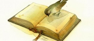 bird-and-book