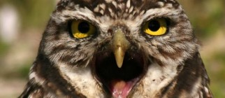 burrowing-owl-eye-to-eye-max-allen