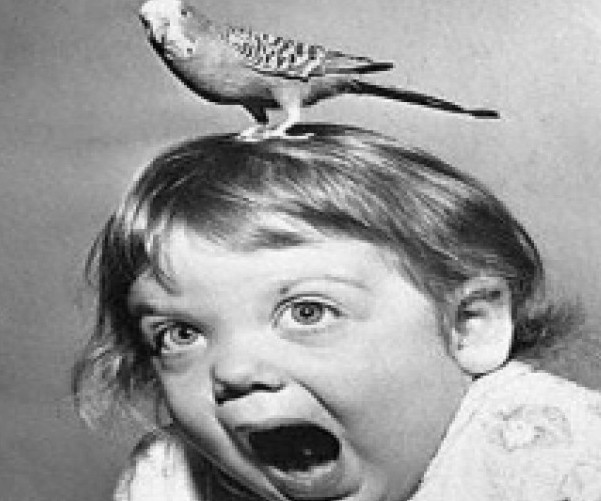scary-bird