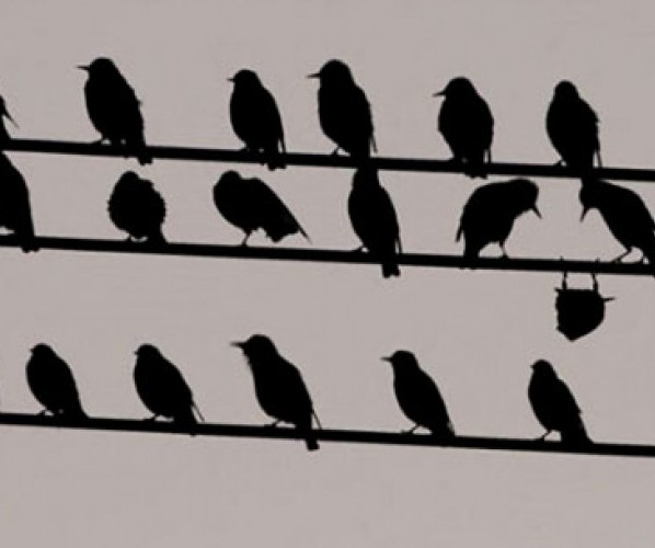 birds-on-wires