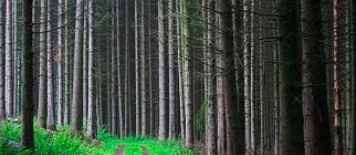 forest_road_picture_mystery