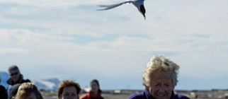 dive-bombing-tern
