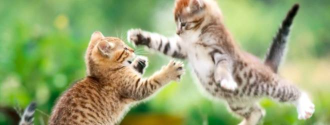 funny cat fight Why getting out of your comfort zone is hard (but not impossible)