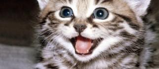 kitten_smile_B-407277