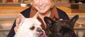 Martha_Stewart_french_bulldog