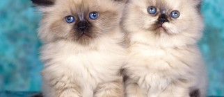 cats-wallpaper-1152×864
