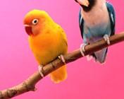 Flirty-birds–15919