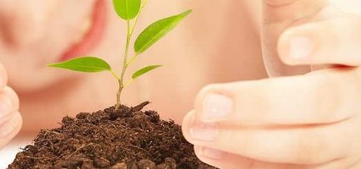kidandplant