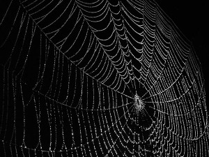 spider web 1a 300x225 Google can now index nearly any website comment, including Facebook. So now what?