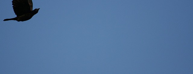 bird, relaxing in blue sky by extranoise
