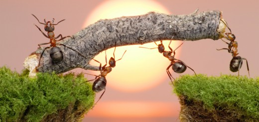 ants coworking