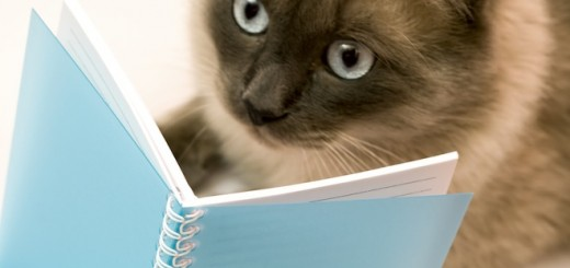 Funny cat amazed by what she`s reading