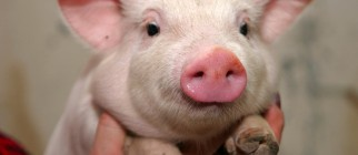 Screen shot 2012-04-11 at 12.45.18 PM