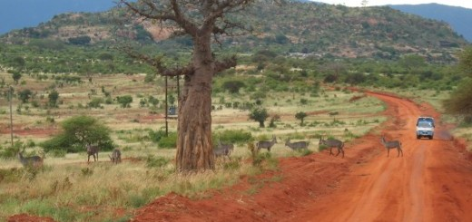 african_safari_route-520×390-520×245