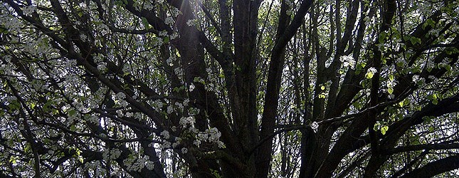 tree660