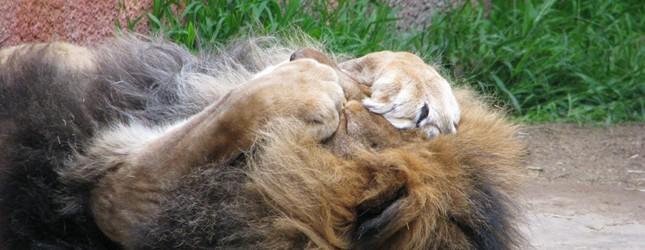 lion660