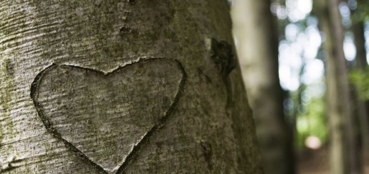 love carved on a tree via Pond5