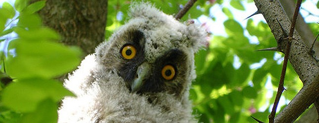 owl660