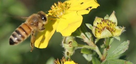 bee bee