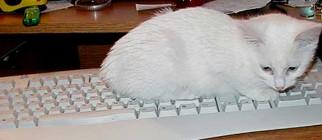 kittenkeyboard660