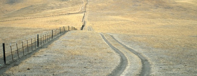 Tire tracks in grassland