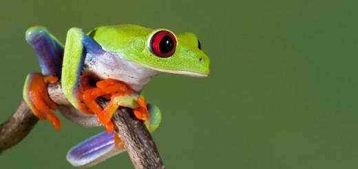 frog jfdi asia