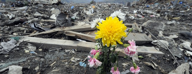A flowers sits among the rubble in the t