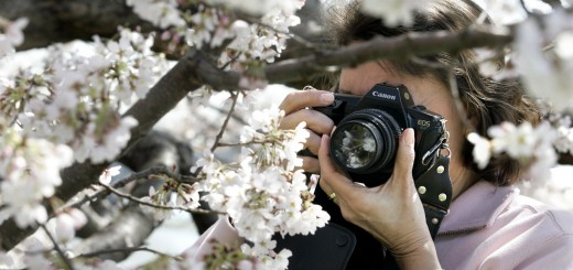 Cherry Blossoms Bloom in Nations Capitol