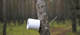A tree makes for a toilet paper holder a