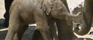 ISRAEL-ANIMALS-ZOO-ELEPHANT-BIRTH