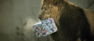 Animals Recieve Christmas Treats At London Zoo