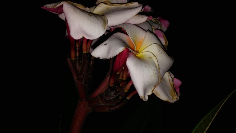 flowerflash-lgg2