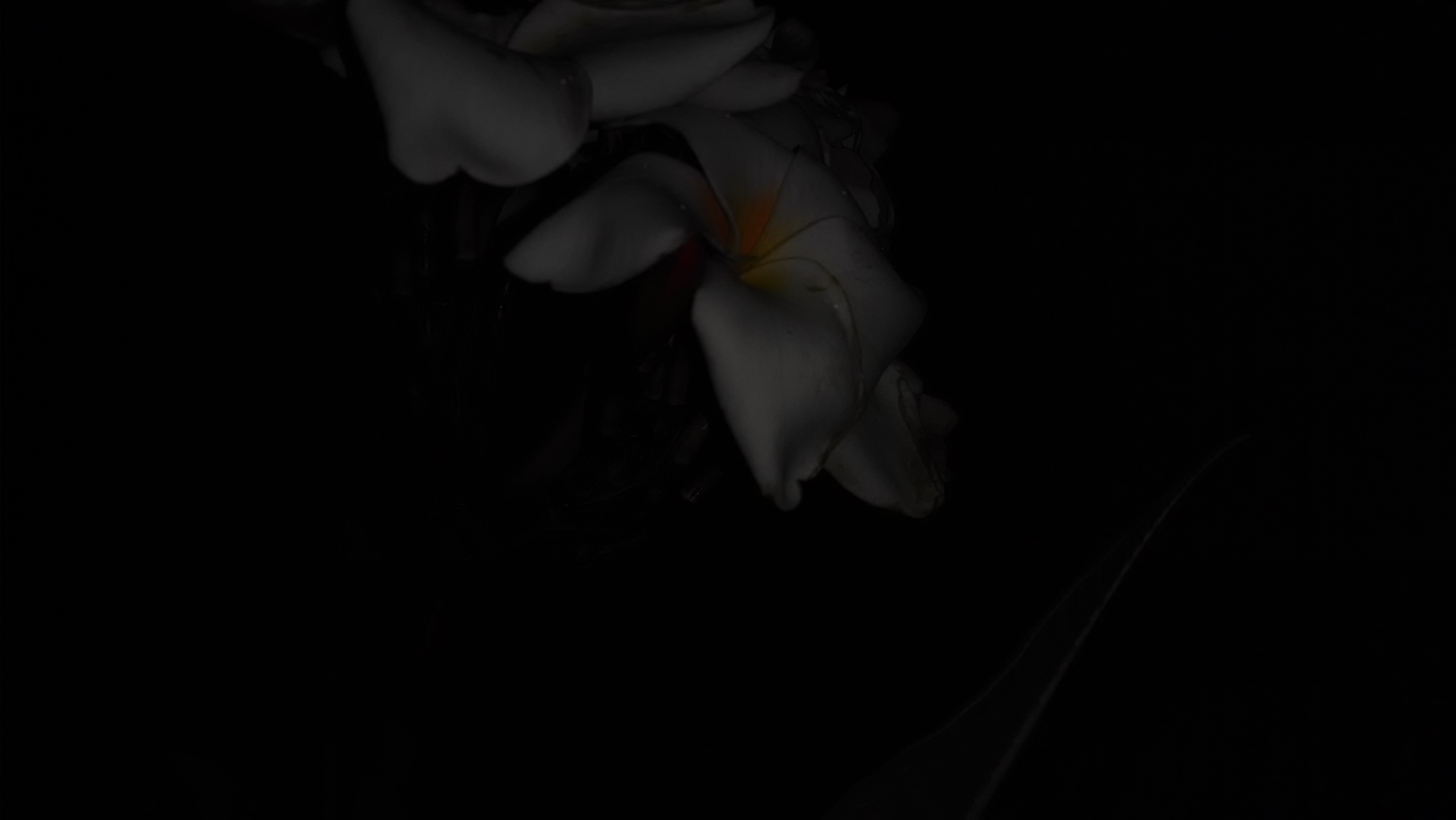 flowerflash-motox