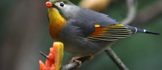 London Zoo Opens New Tropical Bird Experience