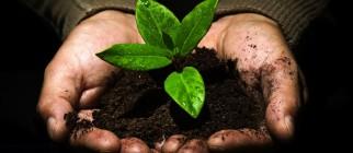 Seed soil
