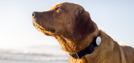 whistle 3 crop 520x245 Whistle adds Android support to its wearable activity tracker for dogs