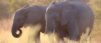 Luxury Tourism In Botswana