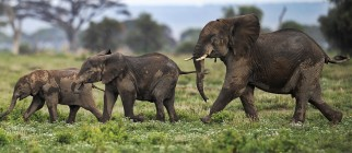 KENYA-ELEPHANTS-POACHING