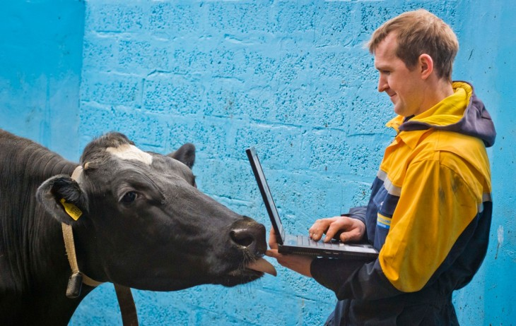 Wearable tech for tracking when cows are in heat? Sure, why not?