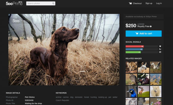 Prime Photo Page 730x444 500px commercial Prime photo marketplace rolls out of beta