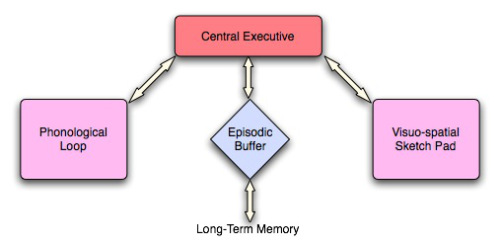 episodic buffer The science of memory (and 4 uncommon ways to enhance it)
