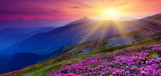 Beautiful landscape flowers