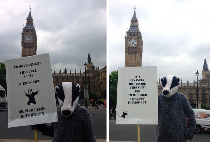 Badgerwish 730x493 Crowdwish: The startup thats willing to dress up as a badger on your behalf