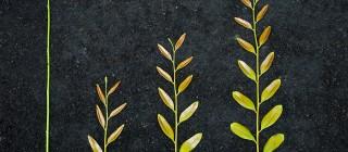 seed tree grow