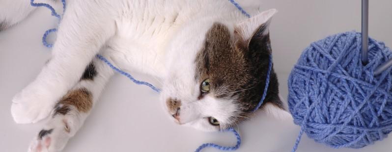 tangled cat yarn