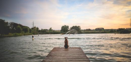 dog alone pier