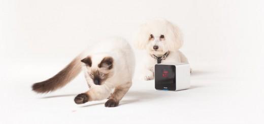 Petcube_Camera-Dog&Cat